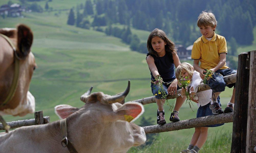 Un piacere puro: una vacanza in agriturismo con bambini in Alto Adige è molto divertente!